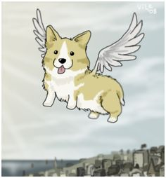 I love this! A corgi with wings!!