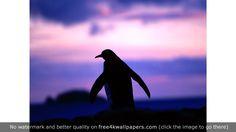 Sunset Penguins wallpaper
