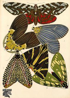 Astonishingly beautiful French Art Noveau design portfolio, 'Papillons' by E.A. Seguy   Butterflies of the World. Rare. www.rareilustratedbooks.com