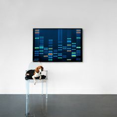 Your pet's DNA sequence printed on canvas. You'll get a sample collection kit, once it's sent back, a reputable lab extracts the DNA and creates a raw digital image of Fluffy's genetic sequence.