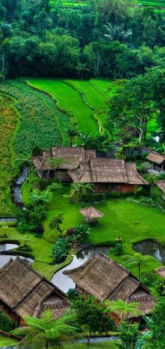 A Tranquil Village ~ Bali, Indonesia