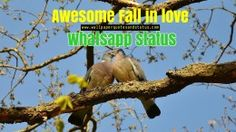 fall in love whatsapp status, fall in love quotes
