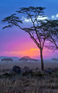Picturesque Trees | Top 10 Photography