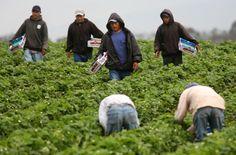 Pressing food policies