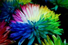 real multi-coloured flowers