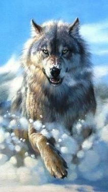 """Find and save images from the """"Wolfs and werewolfs"""" collection by Queen-Werewolf (werewolfskin) on We Heart It, your everyday app to get lost in what you love. Beautiful Wolves, Beautiful Dogs, Animals Beautiful, Tier Wolf, Abstract Wolf, Snow Wolf, Fantasy Wolf, Fantasy Art, Wolf Spirit Animal"""