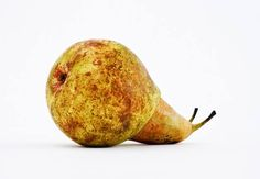 Jose Laino - Snail Pear - Picture Of The Day - ONE EYELAND  2013-04-12