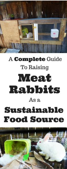 If you're interested in raising your own meat rabbits someday, this article will be a comprehensive place to start. Homestead Farm, Homestead Survival, Survival Skills, Raising Rabbits For Meat, Meat Rabbits, Keeping Chickens, Backyard Farming, Chickens Backyard, Fish Farming