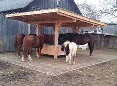 High quality larch feed racks for your horses - Skandwood High quality larch feed racks for your hor Hay Feeder For Horses, Mini Cows, Horse Barn Plans, Horse Shelter, Horse Ranch, Horse Property, Appaloosa Horses, Dream Barn, Horse Farms