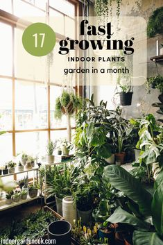 You might think that in order to have a greenish beautiful indoor garden  requires a lot of time and efforts. It doesn't have to be that way. So,  here's the list of fast-growing plants that can make your indoor garden  green and ravish in a short period of time.