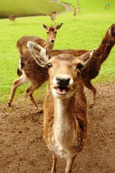 smile you are beautiful deer in the wild