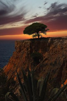 A tree that has withstood a lot of ocean-bound air; you'd think it would be bent nearly double in that location.