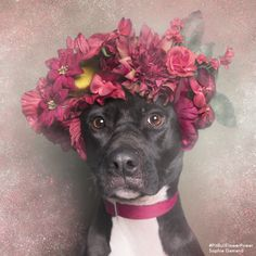 Beautiful Pit Bulls Wear Crowns Of Flowers Just In Time For Spring