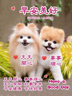 Good Day, Good Morning, Chinese, Buen Dia, Buen Dia, Hapy Day, Bonjour, Good Morning Wishes, Chinese Language