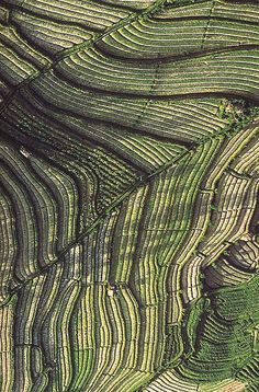 Aerial Landscape, Balinese rice terraces, Ian Alexander