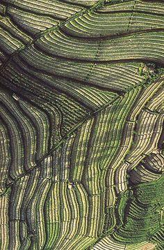Aerial Landscape, Balinese rice terraces, Ian Alexander