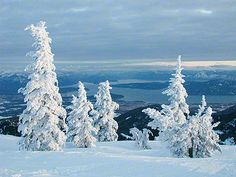 snow covered trees at Schweitzer, lake Pend Oreille