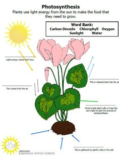 Teach the process of photosynthesis with this free, downloadable activity.