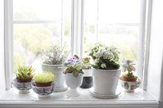 Window Sill Garden Photos