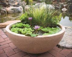 patio pond Aquascaping, Cyperus Papyrus, Patio Pond, Patio Planters, Backyard Pergola, Container Water Gardens, Container Gardening, Gardening Tips, Organic Gardening