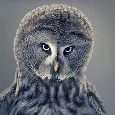 Tim Flach: «More Than Human»