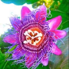 Passion fruit flower. Captured while in Costa rica.