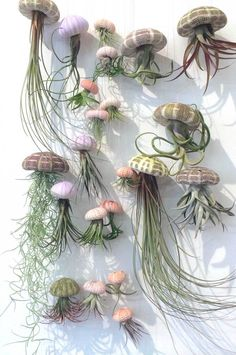 Airplant Jelly fish - All For Herbs And Plants Air Plant Display, Plant Decor, Air Plants, Indoor Plants, Succulents Garden, Planting Flowers, Garden Art, Garden Design, Deco Nature