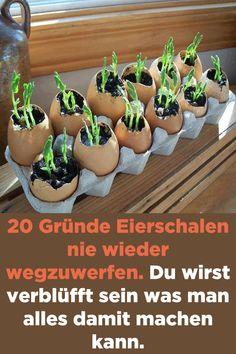 20 reasons to never throw away egg shells. You will fade- 20 Gründe Eierschalen nie wieder wegzuwerfen. Du wirst verblüfft sein was man … 20 reasons to never throw away egg shells.