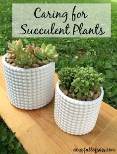 How to Care for Succulent Plants. I love succulents!