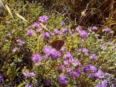 Lepidoptera Lovers   Groups   LinkedIn