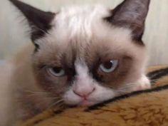 grumpy cat pics | The Water Bowl: Why Is Tard the Internet Cat So Grumpy?