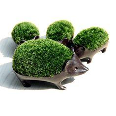 【楽天市場】苔盆栽子はりねずみブロンズ製/アラハシラガゴケ:surou web shop