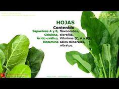 Gráfica - Farmacognosia. Plantas medicinales