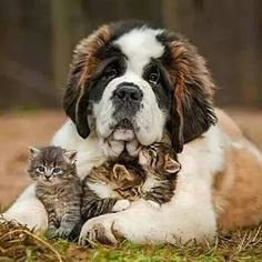 Be TOGETHER - Not THE SAME ❤ Pic: @diply #animals #nature #family #love #together #dogs #kittens #pets #photo #MWA