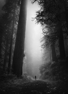 Alone in the Forest Black and white photography Beautiful World, Beautiful Places, Wonderful Places, Belle Photo, Black And White Photography, The Great Outdoors, Mists, Paths, Nature Photography