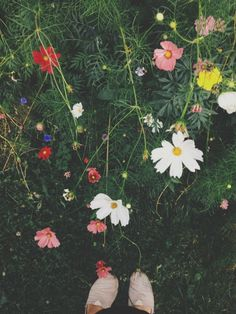 Like a painting that changes every day. #urbangarden #backyard #simplicity #color #summer | suzuran | VSCO Grid