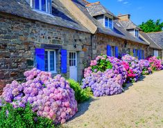 Photo about Colorful Hydrangeas flowers decorating traditional stone houses in a small village, Brittany, France. Image of fence, hortensia, garden - 67560891 Hortensia Hydrangea, Hydrangea Bush, Hydrangea Colors, Hydrangea Macrophylla, Hydrangea Flower, Hydrangea Landscaping, Front Yard Landscaping, Landscaping Ideas, Hydrangeas For Sale