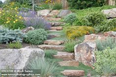 steps and wooly thyme Wooly Thyme, Yoga Garden, Planting, Gardening, Outdoor Living, Outdoor Decor, Two Year Olds, Propagation, Drought Tolerant