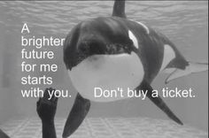 Don't buy a ticket to SeaWorld! It starts with YOU! Empty the tanks!! Sick, horrific drilling of their teeth! Orca. Killer whale. Captivity kills. Boycott marine parks. Get the facts. Protect our majestic oceans and sea life! Sustainable world!