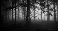 Hoia Baciu Forest – the World's Most Haunted Forest Misty Forest, Dark Forest, Hoia Baciu Forest, Haunted Forest, Spooky Trees, Forest Background, Spooky Places, Forest Wallpaper, Most Haunted