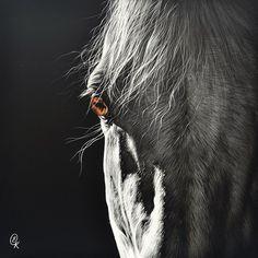Glance - Scratchboard - Elena Kolotusha