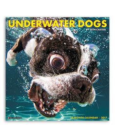 2015 underwater dogs wall calendar willow creek press jg