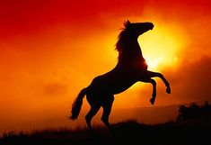 wild horses rearing in the sunset - Google Search