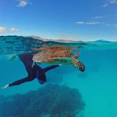Who's up for some synchronised swimming on the Southern Great Barrier Reef? Synchronized Swimming, Adventure Holiday, Gladstone, Camping And Hiking, Great Barrier Reef, Plan Your Trip, Nirvana, Snorkeling, Surfing
