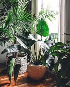 Amazing Indoor Jungle Decorations Tips and Ideas 55 House Plants Decor, Plant Decor, Green Plants, Tropical Plants, Jungle Decorations, Deco Nature, Interior Plants, Foliage Plants, Beautiful Interiors