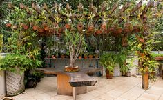 orchids (Foto: Edu Castello) Container Plants, Container Gardening, Garden Art, Garden Design, Mexican Patio, Orchid House, Growing Orchids, Orchids Garden, Greenhouse Gardening