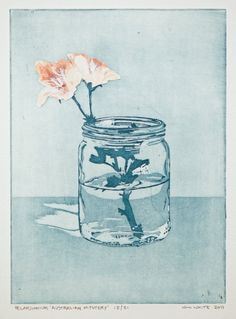 pelargonium 'australian mystery' etching ~ Whilliam White