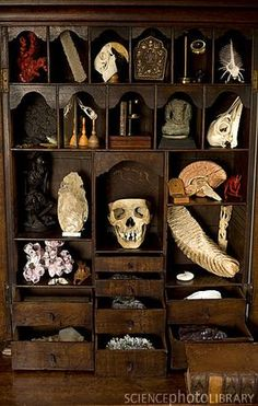 A private cabinet of curiosities. Items include from top left red coral venus flower basket macaw skull Tibetan shrine lens condenser spiny shell chinese ink case sea bird skull microscope and miniature book Thai Buddhist idol ostrich skull starving Budda Vanitas, Curiosity Cabinet, Curiosity Shop, Brain Models, Mammoth Tooth, Memes Arte, Historia Natural, Cabinet Of Curiosities, Bird Skull