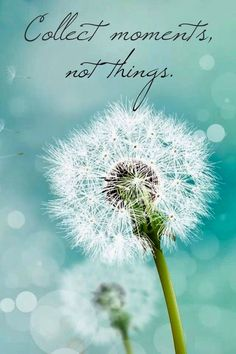 """Search Results for """"galaxy note 3 lock screen wallpaper hd"""" – Adorable Wallpapers Dandelion Wallpaper, Flower Wallpaper, Of Wallpaper, Unique Wallpaper, Perfect Wallpaper, Wallpaper Ideas, Mobile Wallpaper, Blowing Dandelion, Dandelion Wish"""