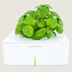 Click and Grow herb kits for the challenged #gardener-Bliss Ranch: Basil Click and Grow Kit